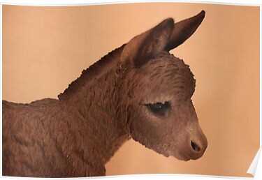 DONKEY 2 by Jack Catford