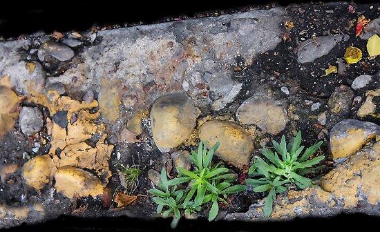 Street Art...Life on The Ground by heatherfriedman