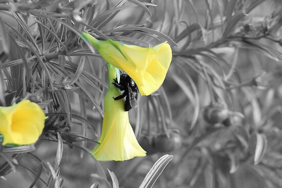 bumble bee on a flower by Windy Rodriguez