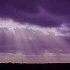 Purple rays by Avril Harris