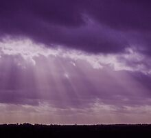 Purple rays by Avril Harris