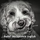 No Speakie Inglish by Terry Arcia