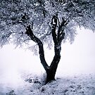 Cold tree by borisdunand