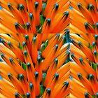 Orange Bud Medley by paintingsheep