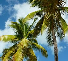 Antiguan Palm Trees by Jamie Parker