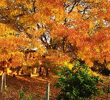 Autumn, Kilmore East VIC Australia by Margaret Morgan (Watkins)