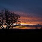 Sunset Golden Valley 01 by gardencottage