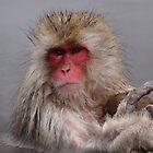 Snow monkey by sammyphillips