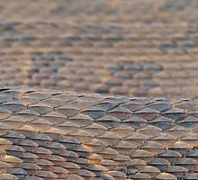 Scales of a Water Snake by William C. Gladish