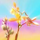 lily rays-ipad by angeldragon069