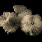 Mushrooms by Barbara Morrison
