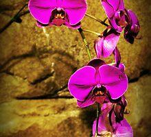 purple orchids by angeldragon069