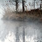 12.5.2013: Morning at the Pond by Petri Volanen