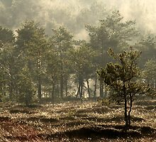 12.5.2013: Sunrise at the Swamp by Petri Volanen