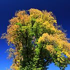 Autumn Tree by Charles Kosina