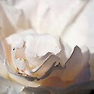 I LOVE TO SMELL THE ROSES IN MAY II by laureen warrington
