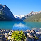 Flowers For Lake Louise - Alberta by Yannik Hay