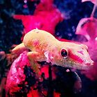 Luminous Gecko by Chairboy