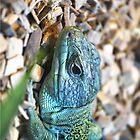 The Lizard by Jonathan  Ladd