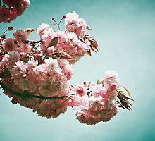 Pink blossoms by Ms-Bexy