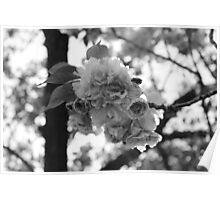 Botanic Garden, Brooklyn. Poster