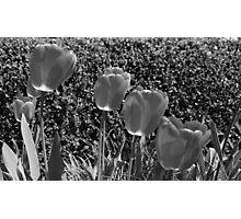 Botanic Garden, Brooklyn. Photographic Print