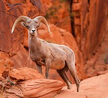 Red Rock Guardian by James Marvin Phelps