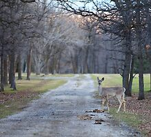 The Country Lane by Don Arsenault