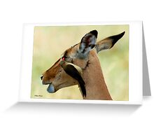OUTCH! THAT'S MY EYE ! IMPALA – Aepyceros melampus melampus - *ROOIBOK* Greeting Card