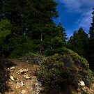 spring time in the Siskiyou mountains by Jeannie Peters