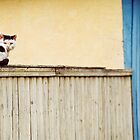 Cat on a fence by Ghinita Leontin