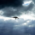 Gliding 2 by Sally Barnett