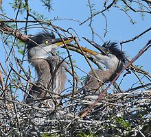 Where's Mom by Kathy Baccari