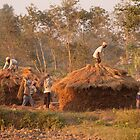 Rice Harvest, Chitwan by Christopher Cullen