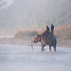 Elephant crossing the Narayani River by Christopher Cullen