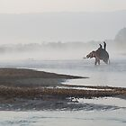 Elephant crossing the Narayani / Rapti River by Christopher Cullen