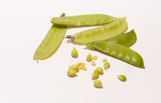 Sugar snap peas  by Michael Hollinshead