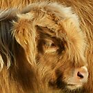 Dartmoor Calf by Sally Barnett