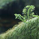 Dartmoor Fern by Sally Barnett
