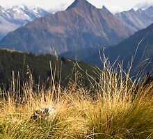 Alpine Grass by Walter Quirtmair