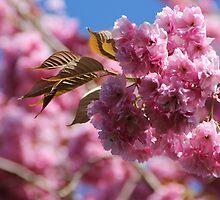 Wild Cherry Tree by MimiB