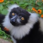 Looking at you, Lemur.. by Karen01