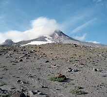 Mount Hood in Summer by michellemarye