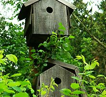 Pair of Birdhouses by kchase