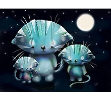 Lucky, Lola and Luna, Full Moon Cats Photographic Print