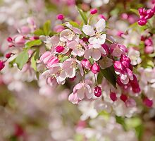 Beautiful Blossom by Natalie Kinnear