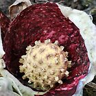 Skunk Cabbage Spadix by sherln