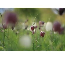 Meadow at Downton Abbey Photographic Print