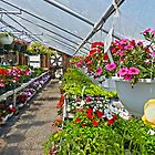 Hanging Baskets by Susan S. Kline
