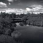 Bog River by Dlouise